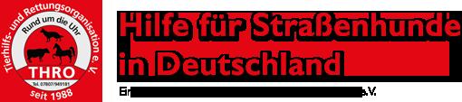 Hilfe für Straßenhunde in Deutschland